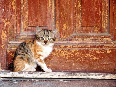 gato diante dunha porta